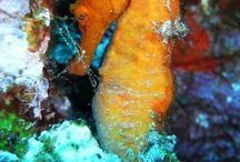 Blogs about diving in Curacao / Blogs about diving in Curacao