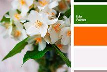 Paleta kolorów