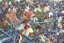 Colores del otoño/őszi színek