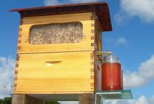 Honey inspiration / by Newhall Farm