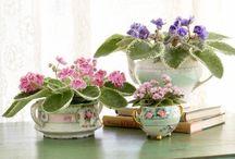 Flowers & frills