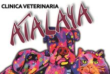 Clínicas Veterinarinarias en AnimalTerra.com