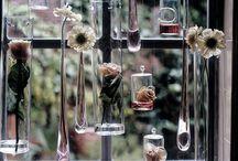 Home: Window Setting ideas