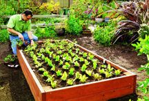 Edible Garden / Necessary Indulgences ~ Eat to Live, Travel to Eat™