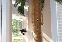 Arrador e cia gatos