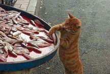 ひとっぽい猫