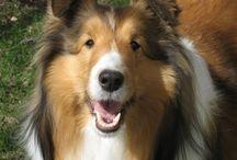 I love Dogs! / by Aileen Funk