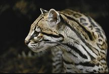 Ocelots - Reference for Pseudaelurus