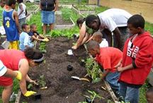 Creation Care / Ways to help your church or community embrace sustainability and green living