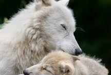 Animals / Bellezza della natura