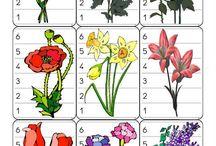 záhradné a lúčne kvety