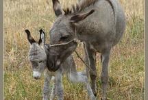 Animal - donkey
