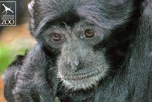 Primate World