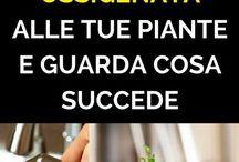 soluzioni per le piante
