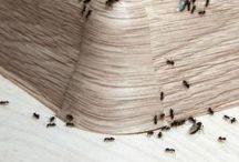 se débarrasser des fourmies et insectes