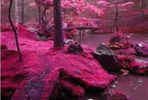 colour : shades of pink
