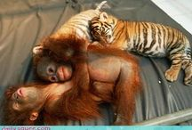 Animals moments