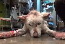 Animal awareness