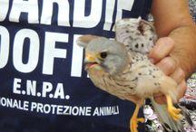 Guardie Zoofile Enpa / Le attività delle Guardie Zoofile dell'Ente Nazionale Protezione Animali Onlus