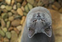 Frandliest Cat Breeds