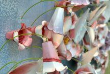 Tavaszi kirakat