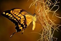 Bugs: Butterflies and Moths