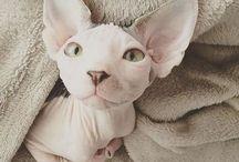 ^^ kittens