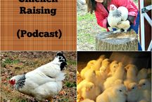 Timber Creek Farm Blog / The best homesteading posts from Timber Creek Farmer.