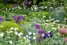 Grow It With Style - Garden / Gorgeous plants & flowers.