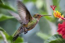 Hummingbirds / by Lisa Barnhill