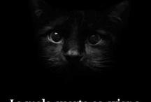 pensamiento de gato