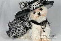 SeRi - in a limited edition tonimari Formal wear / Tonimari Model wearing haute couture dog dresses
