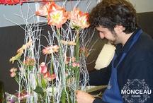 colecciones de floristas