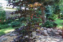 mój ogród przy domu