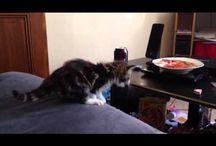 Cat vidéo / by Didier Vincent