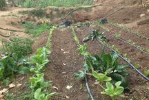 Full Organic Elquimista style  / In Elquimista we plant all our vegetables and fruit organicaly
