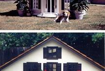 Pets:  Pet Stuff / by Paula Cronin