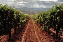 Wine and Grapes / Grapes are the fruit of our Labor and our Labor is of Love