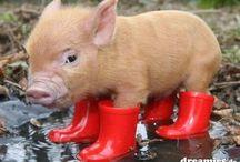 Cute little piglets / Cute piglets✨