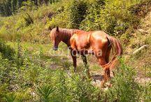 Флора и фауна, природа Кавказа