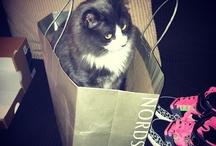 Fashion cats...
