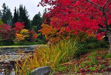 Travel - British Columbia / Vancouver