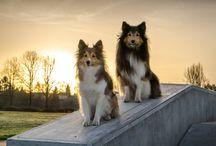 Psi a kočky / Fotky domácích mazlíčků