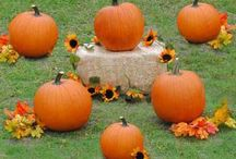 Fall festival / by Heidi Rademacher