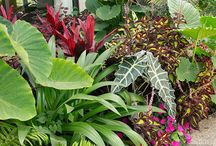 jardim de folhagem