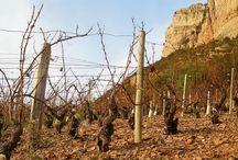 Sols des terroirs viticoles
