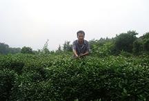 Tea Farmers / by Tealet