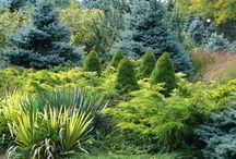 Evergreens / Beautiful varieties of color and texture