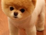 Toooo cute!
