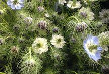 June wedding flower ideas / Soft pastels, wild flower meadow feel all with stunning seasonal stems grown on  our farm.